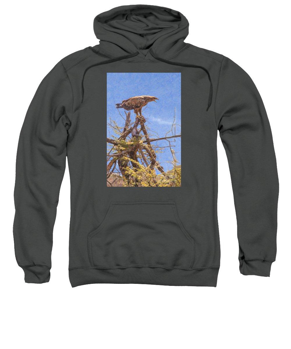 Tawny Eagle Sweatshirt featuring the digital art Tawny Eagle Aquila Rapax Calling From Acacia Bush by Liz Leyden
