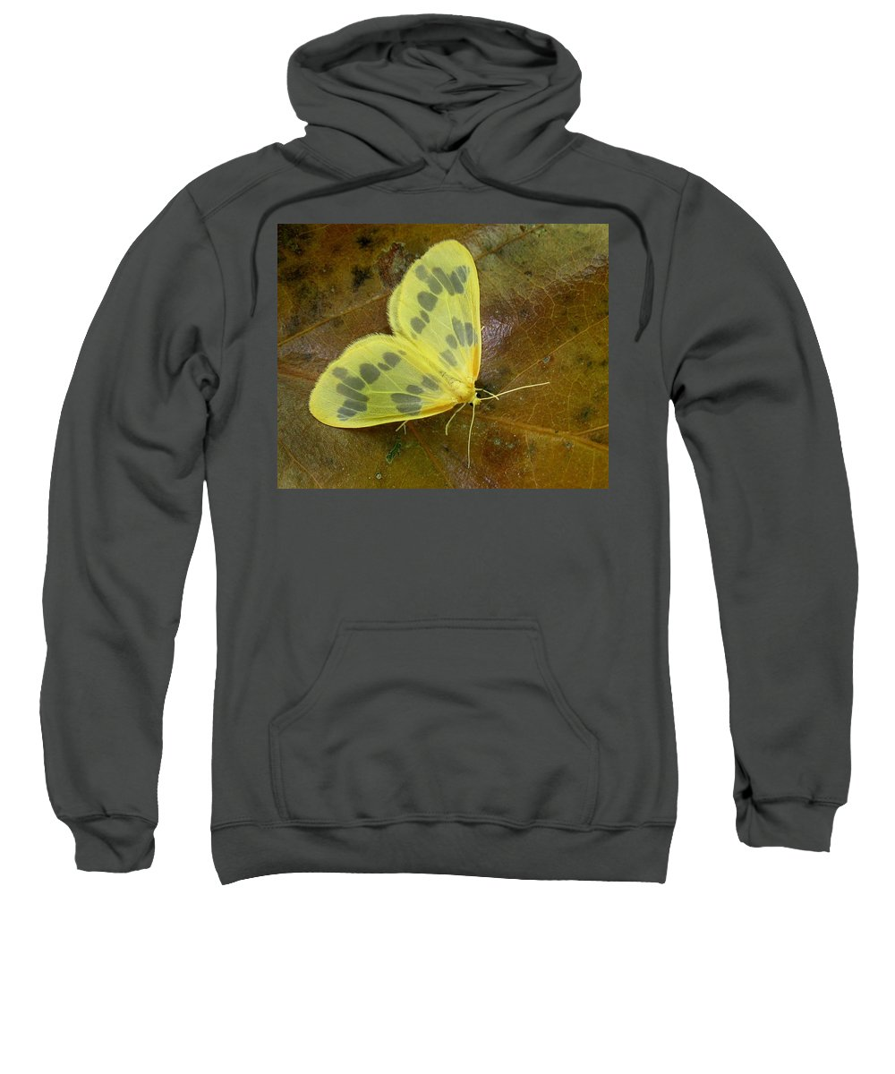 Eubaphe Mendica Sweatshirt featuring the photograph The Beggar Moth by William Tanneberger