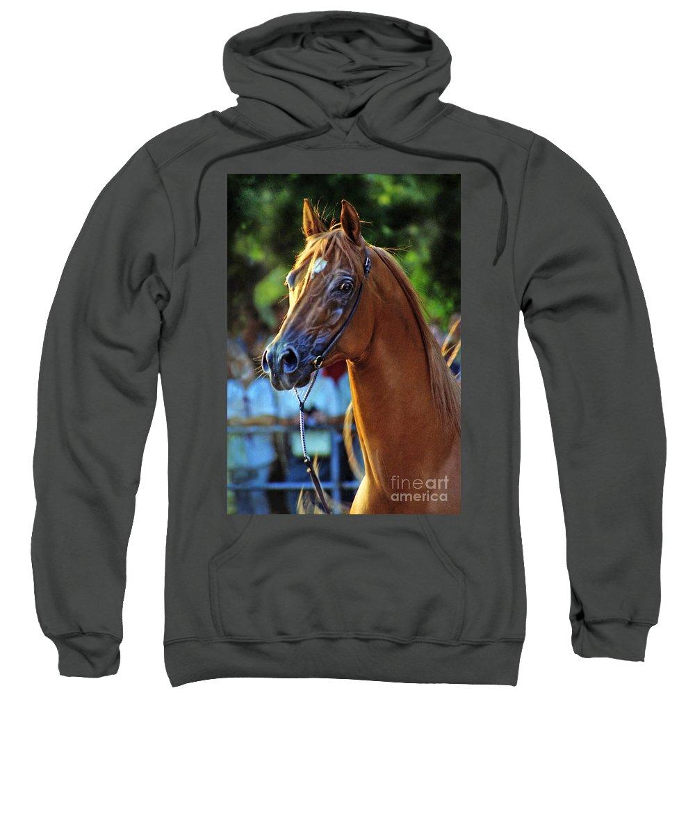 Horse Sweatshirt featuring the photograph The Champion by Angel Ciesniarska