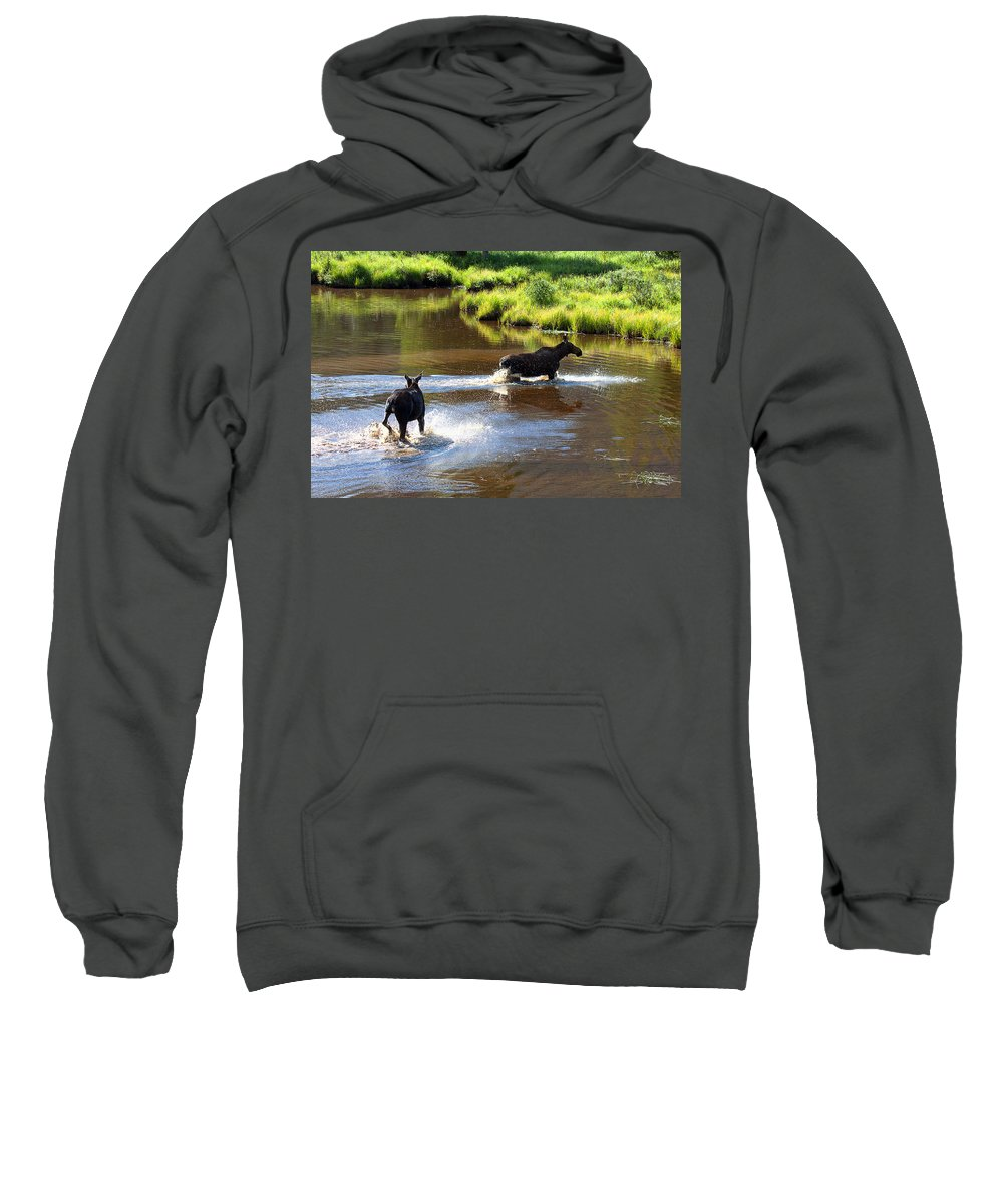 Moose Photograph Sweatshirt featuring the photograph The Chase by Jim Garrison
