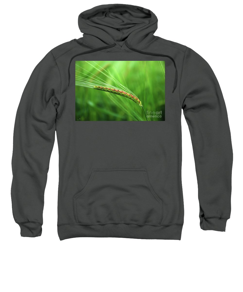 Corn Sweatshirt featuring the photograph The Corn by Hannes Cmarits