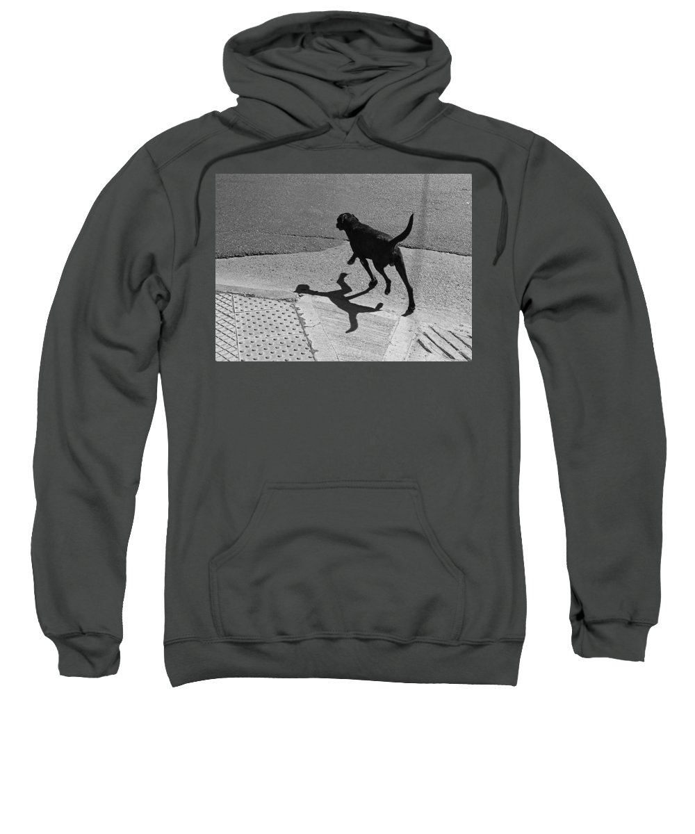 Dog Sweatshirt featuring the photograph The Dog -and The Cat- by Osvaldo Hamer