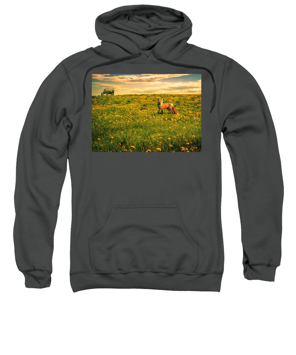 Cows Sweatshirt featuring the photograph The Fox And The Cow by Bob Orsillo