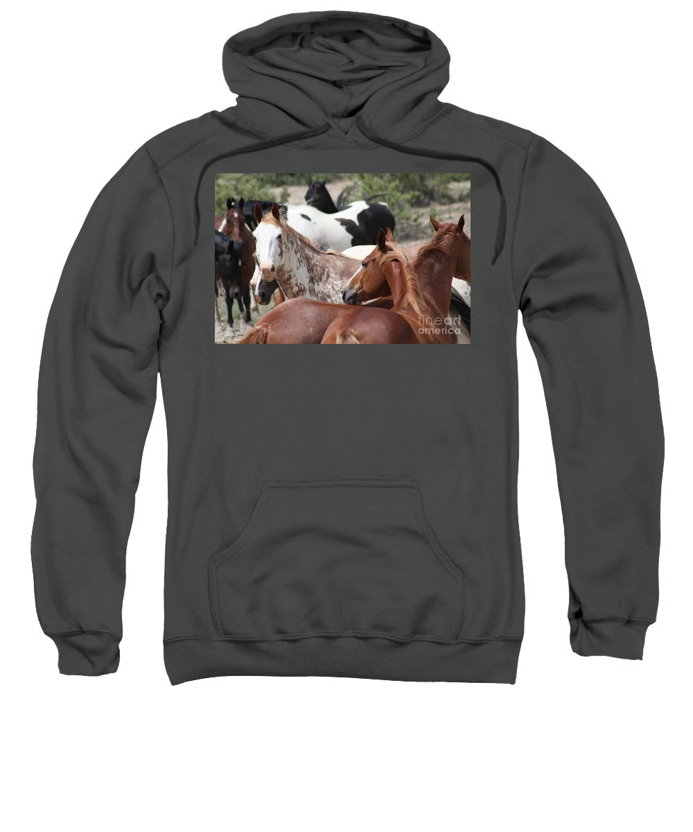 Horses Sweatshirt featuring the photograph The Gang by Brandi Maher