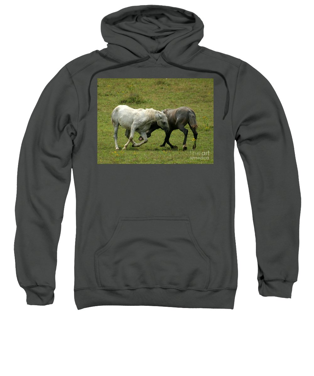 Grey Horse Sweatshirt featuring the photograph The Horse Ballet by Angel Ciesniarska