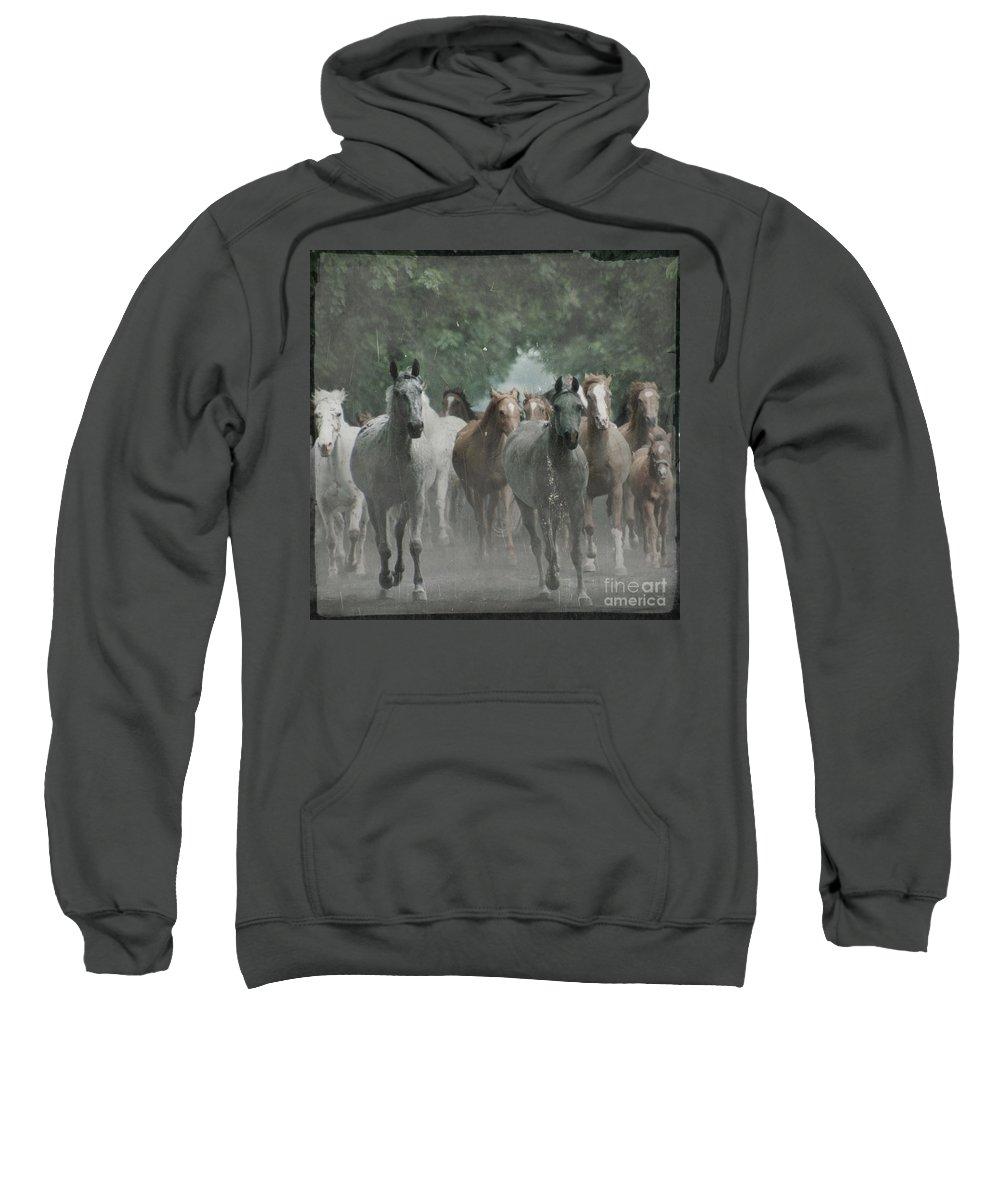 Arabian Sweatshirt featuring the photograph The Horsechestnut Tree Avenue by Angel Tarantella