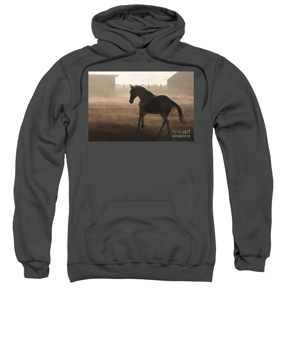 Horse Sweatshirt featuring the photograph The Morning Light by Angel Ciesniarska