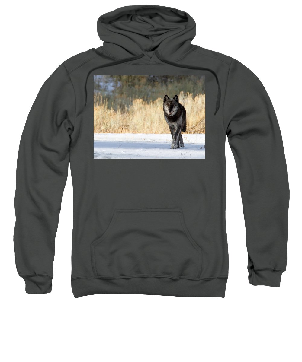 Yellowstone National Park Sweatshirt featuring the photograph The Old Man by Max Waugh