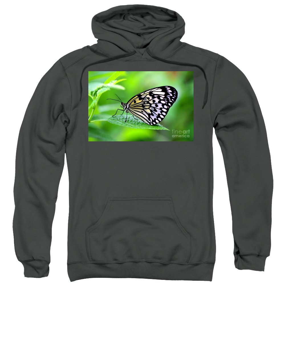Butterfly Sweatshirt featuring the photograph The Paper Kite Or Rice Paper Or Large Tree Nymph Butterfly Also Known As Idea Leuconoe 2 by Amanda Mohler