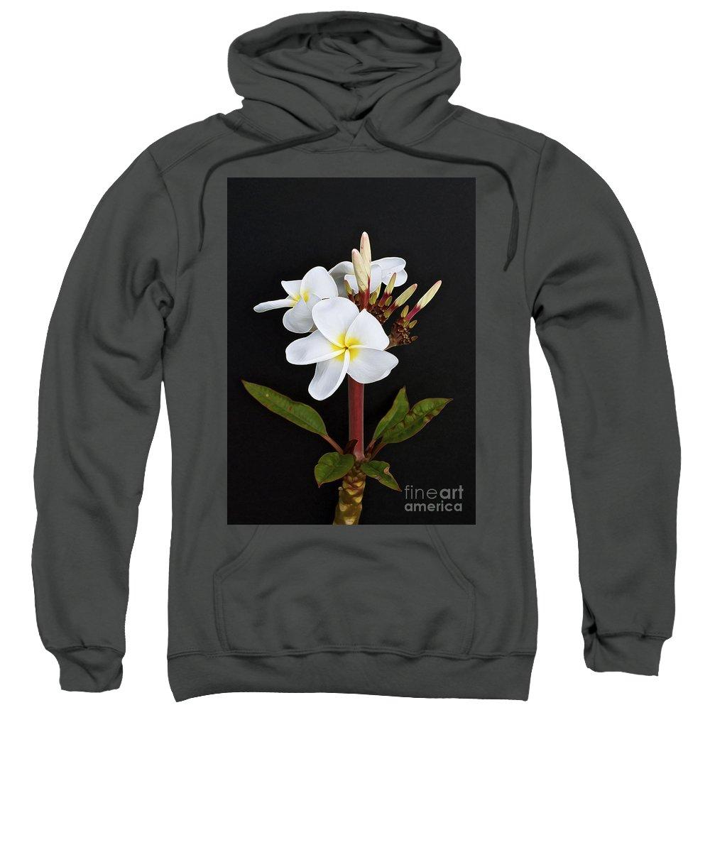 Plumeria Sweatshirt featuring the photograph The Plumeria by Gwyn Newcombe