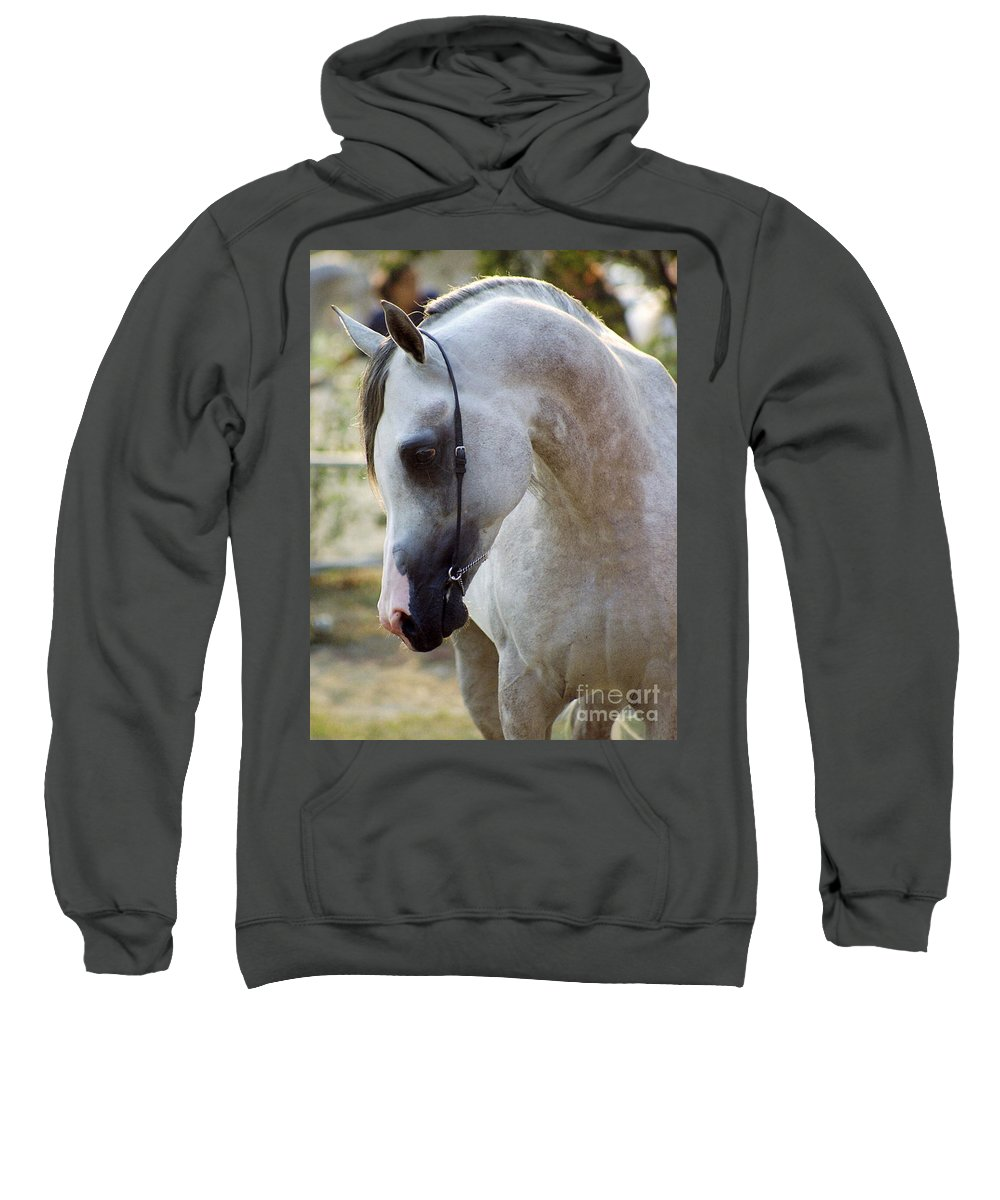 Horse Sweatshirt featuring the photograph The Polish Arabian Horse by Angel Ciesniarska