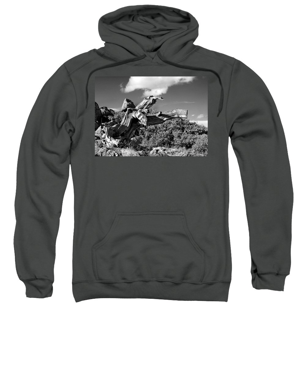 Bristlecone Pine Photograph Sweatshirt featuring the photograph The Prophet by Jim Garrison