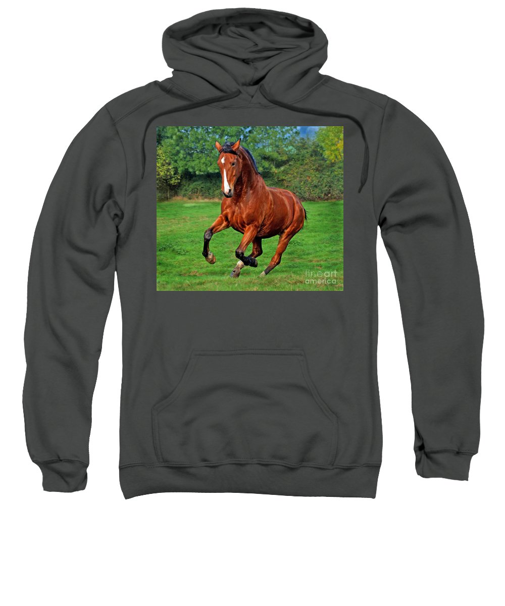 Horse Sweatshirt featuring the photograph The Pure Power by Angel Ciesniarska