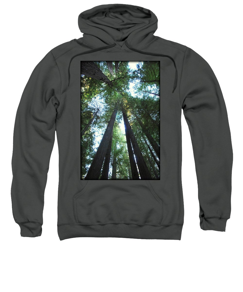 Redwoods Sweatshirt featuring the photograph The Redwood Giants by Kathy Sampson