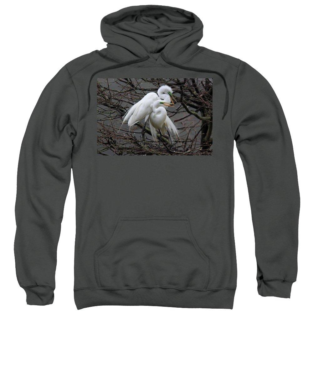 Egrets Sweatshirt featuring the photograph The Return by Mary Ellen Urbanski