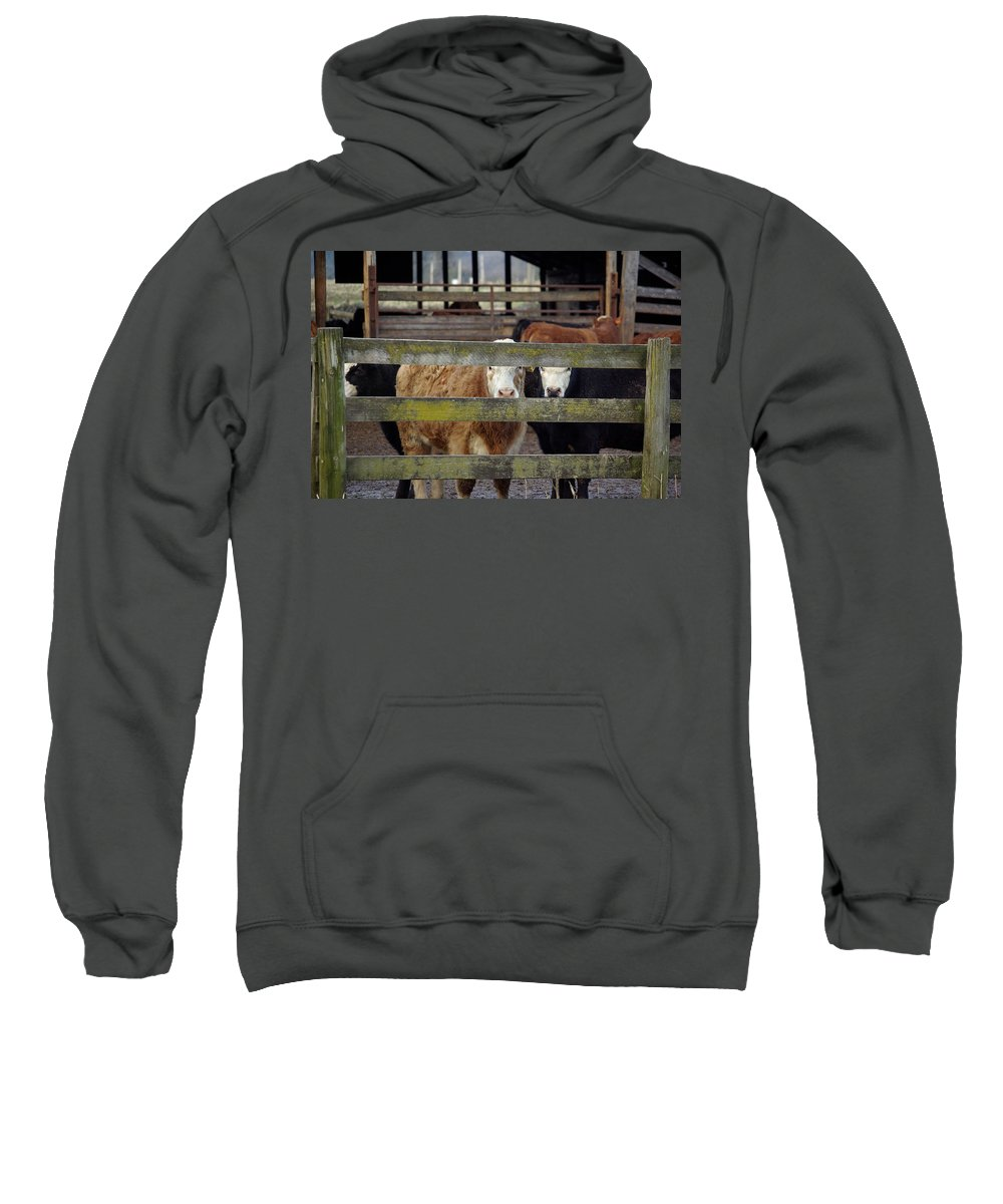 Cow Sweatshirt featuring the photograph The Watchers by Cindy Johnston