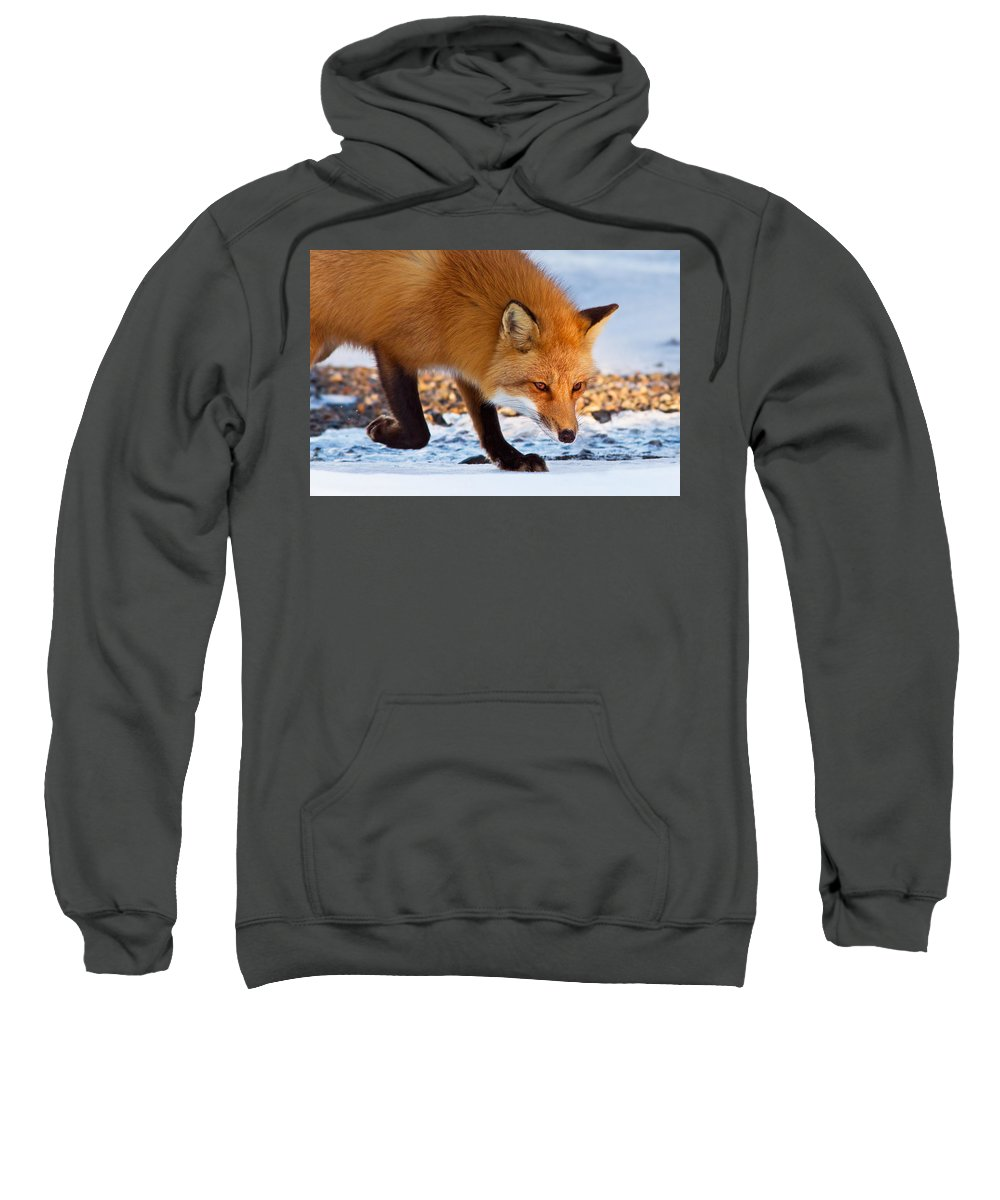 Animal Sweatshirt featuring the photograph The Wise One by Mircea Costina Photography