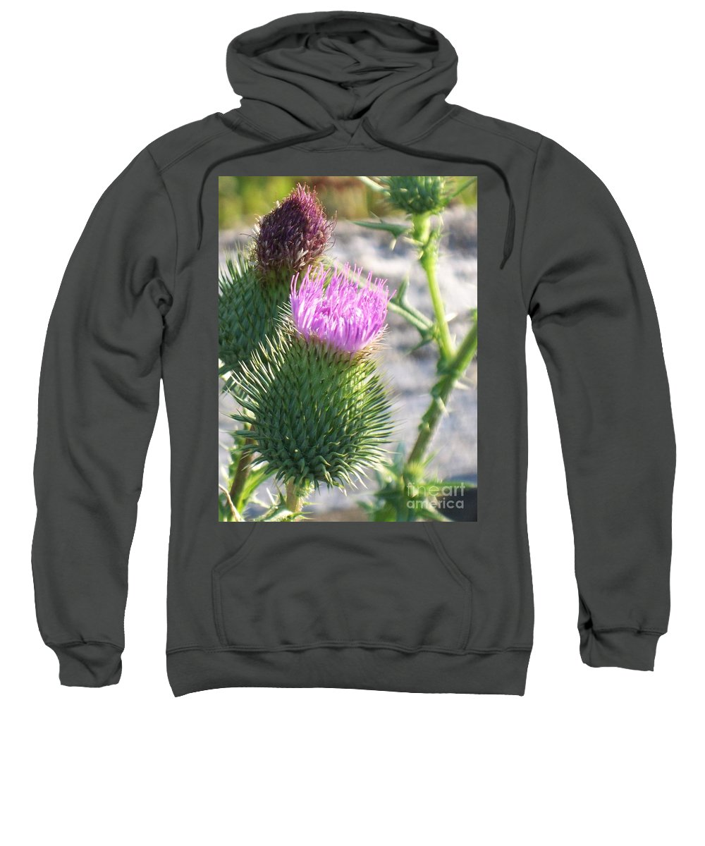 Thistle Sweatshirt featuring the painting Thistle Flower by Eric Schiabor