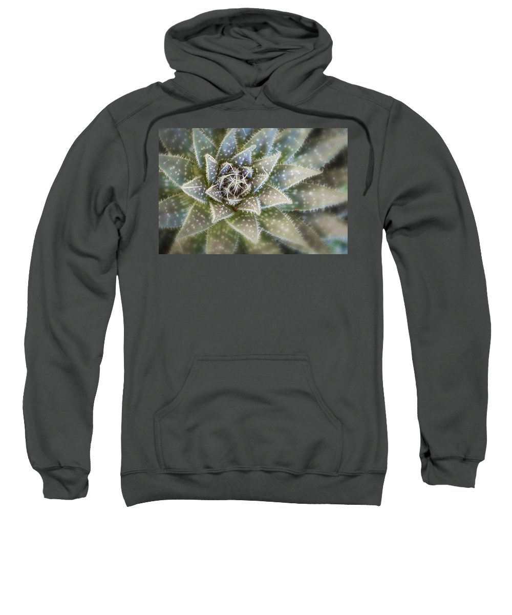 Gardening Sweatshirt featuring the photograph Thorny Succulent by Ludwig Riml