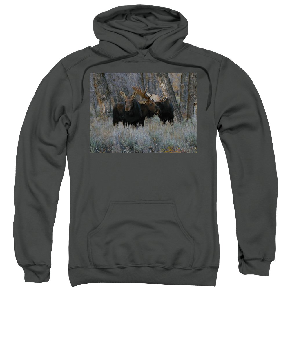 Moose Sweatshirt featuring the photograph Three Moose In The Woods by Jeff Swan