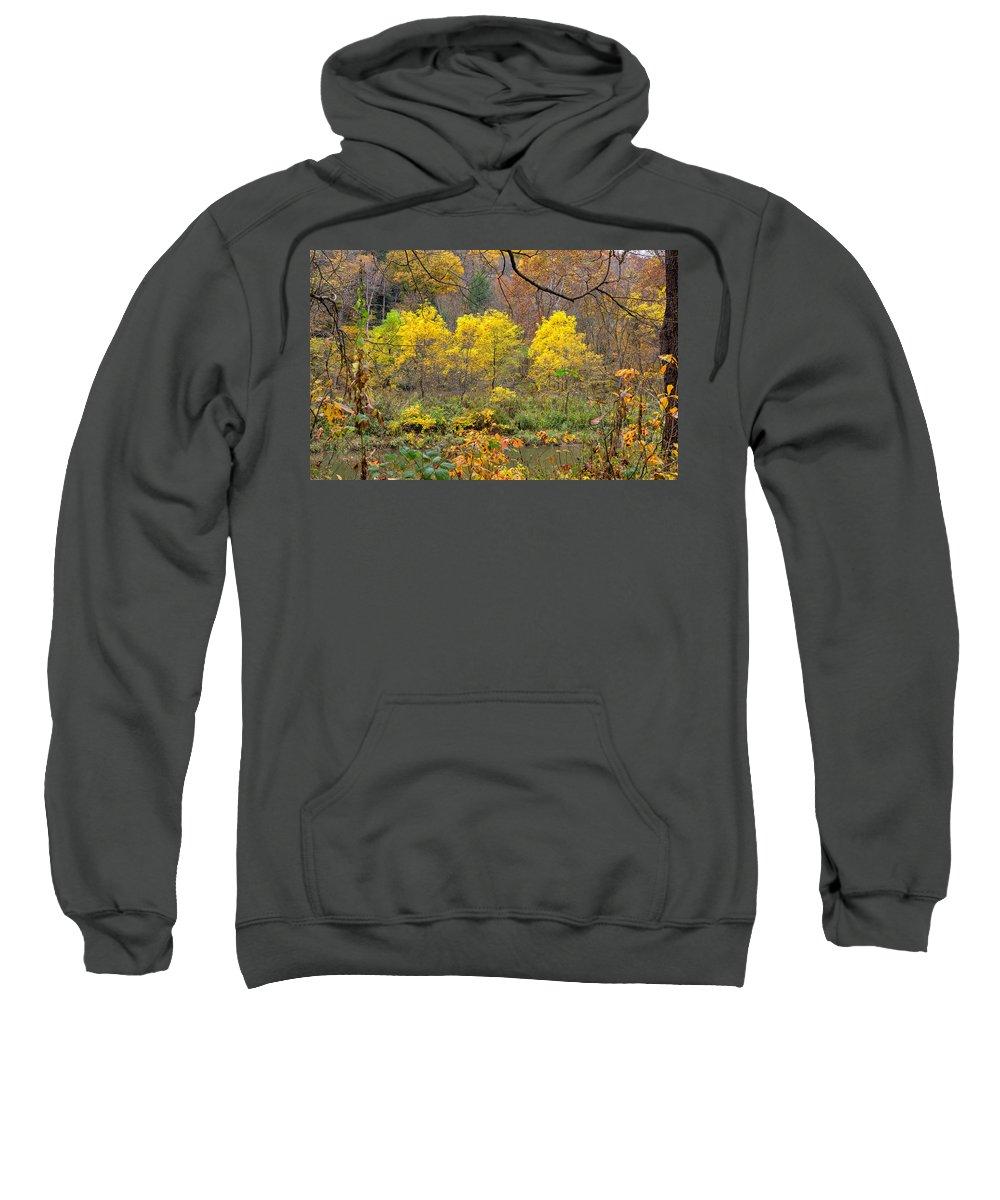 Tree Sweatshirt featuring the photograph Three Yellow Trees by John M Bailey
