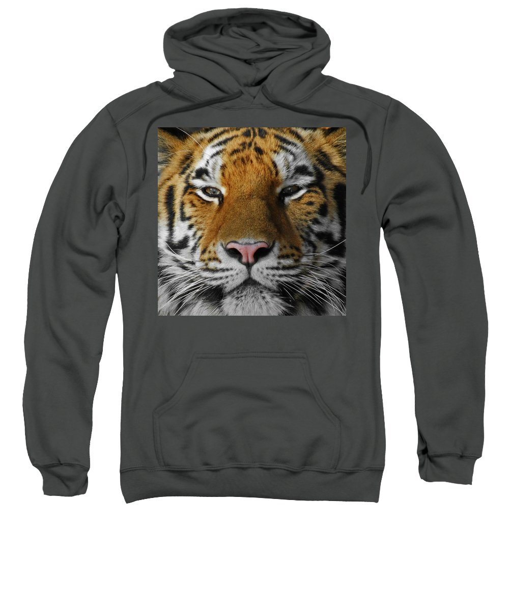 Tiger Sweatshirt featuring the photograph Tiger 1 by Ernie Echols