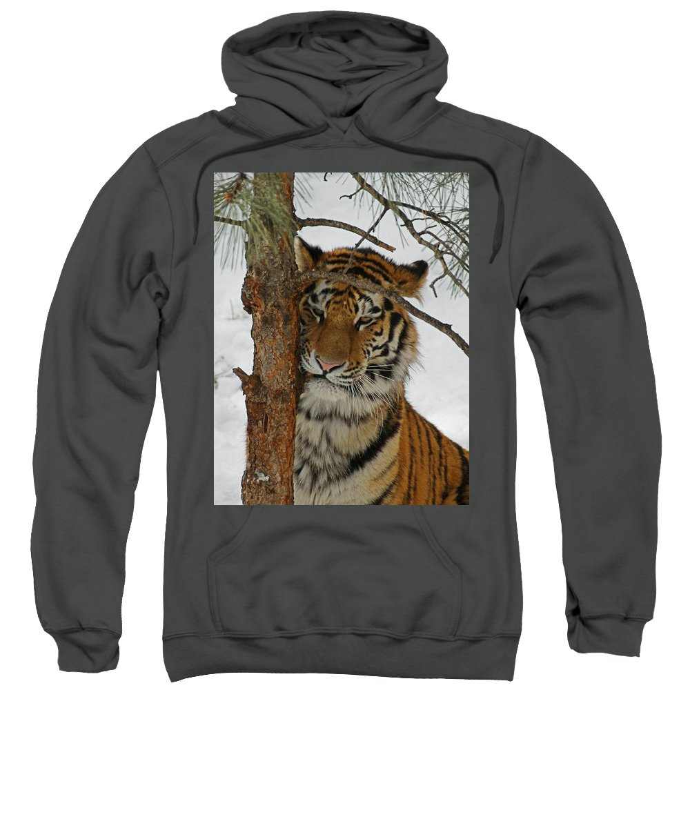 Tiger Sweatshirt featuring the photograph Tiger 2 by Ernie Echols