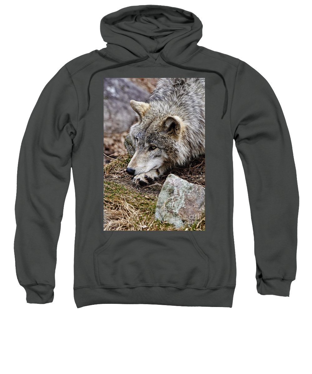 Timber Wolf Sweatshirt featuring the photograph Timber Wolf Pictures 205 by World Wildlife Photography