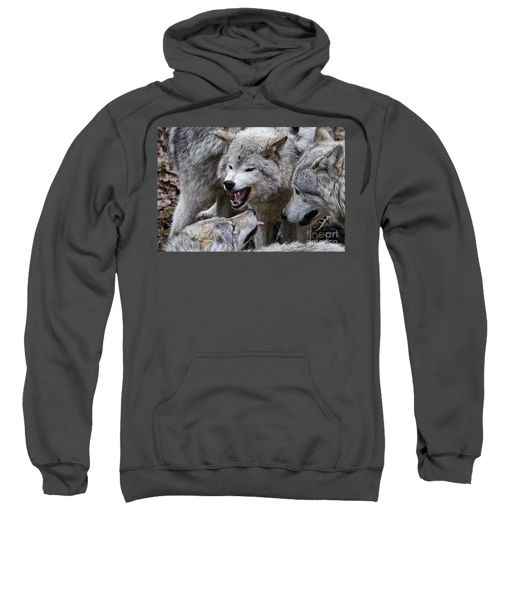 Timber Wolf Sweatshirt featuring the photograph Timber Wolf Pictures 210 by World Wildlife Photography