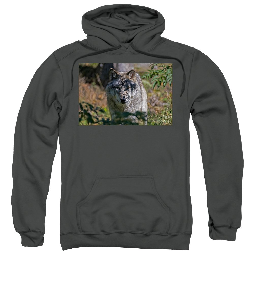 Timber Wolf Sweatshirt featuring the photograph Timber Wolf Pictures 405 by World Wildlife Photography