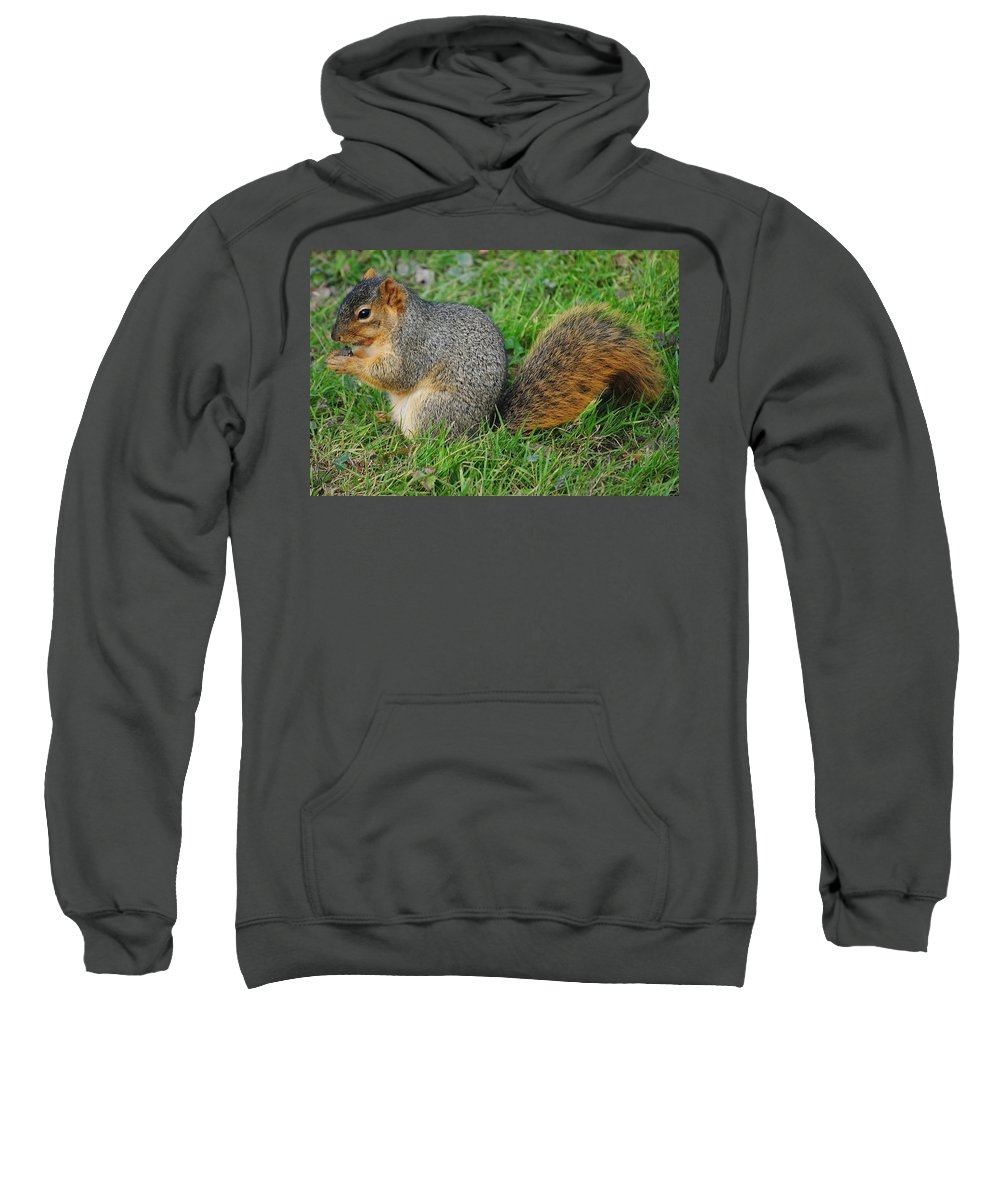 Squirrel Sweatshirt featuring the photograph Time To Feast by Frozen in Time Fine Art Photography