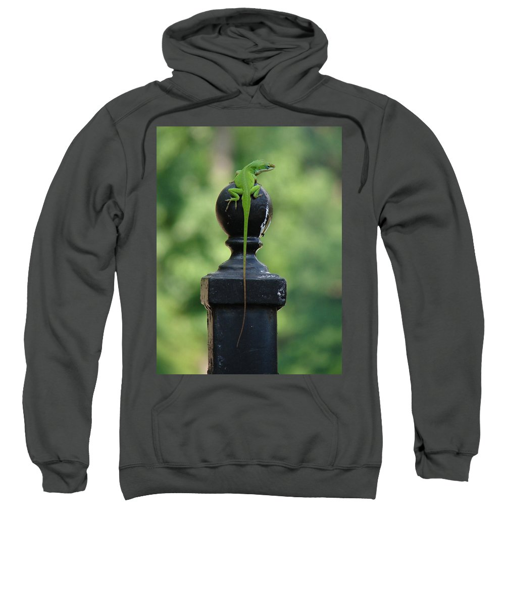 Lizard Sweatshirt featuring the photograph Tip To Tail Reverse by Katherine Sumpter