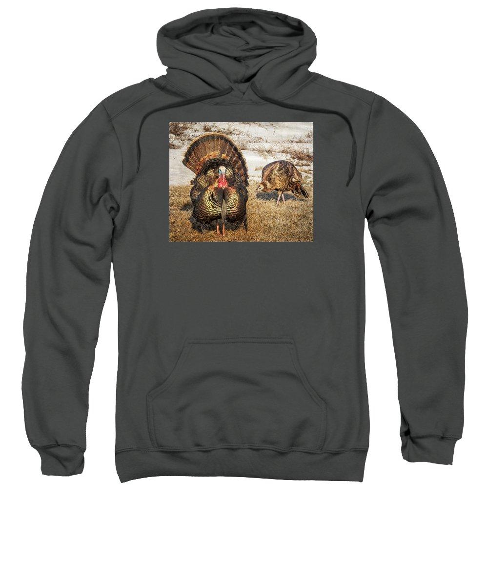 Wild Turkey Sweatshirt featuring the photograph Tom Turkey And Hen by Patti Deters