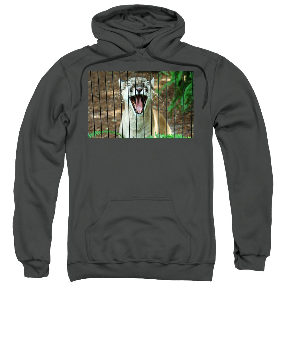 Panther Sweatshirt featuring the photograph Trapped In A Cage by Aimee L Maher ALM GALLERY