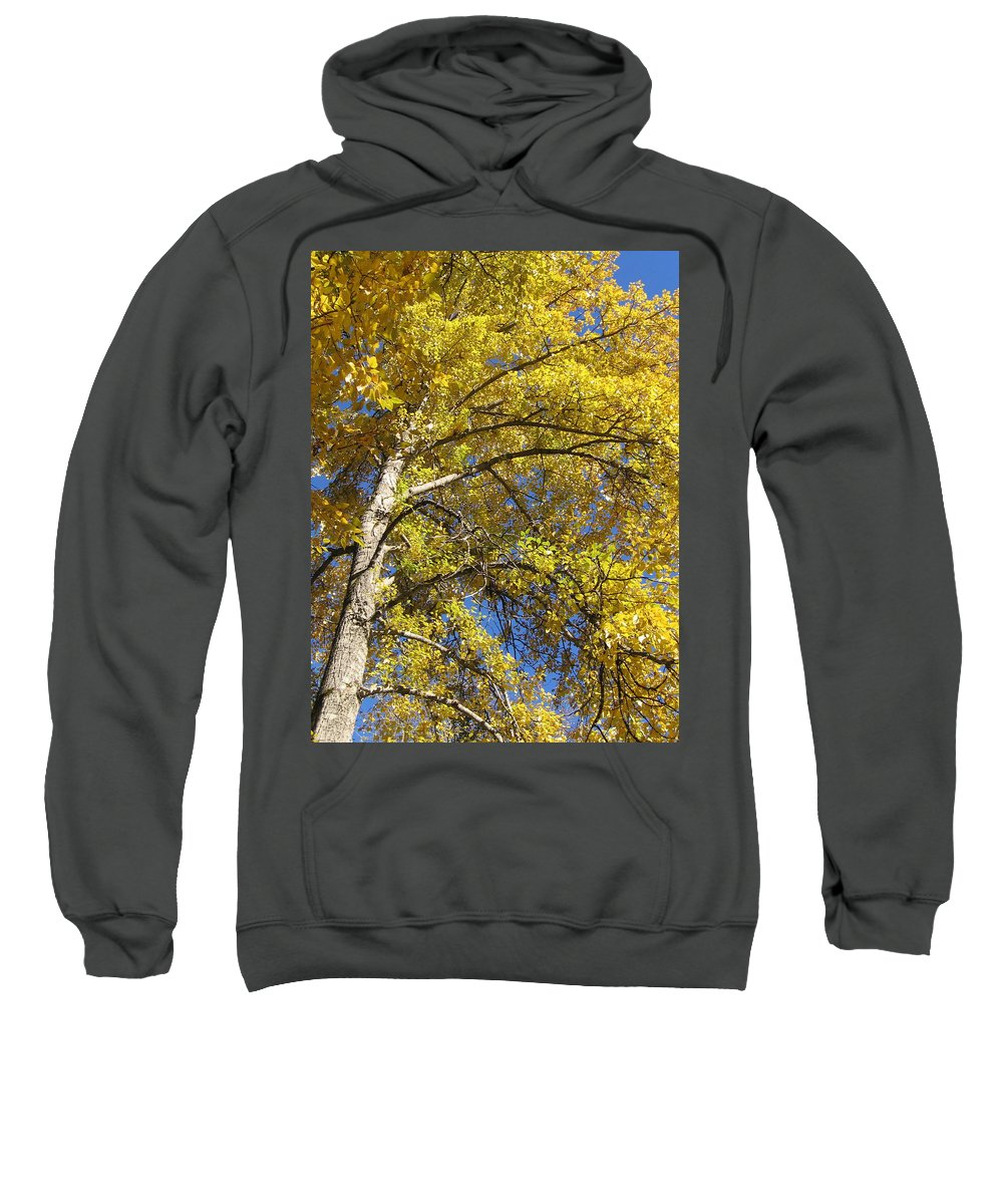 Yellow Tree Sweatshirt featuring the photograph Tree 4 by Kimberly Maxwell Grantier