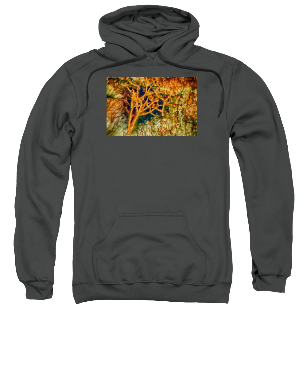 Hot Springs Sweatshirt featuring the photograph Tree In A Park Hot Springs by Scott Campbell
