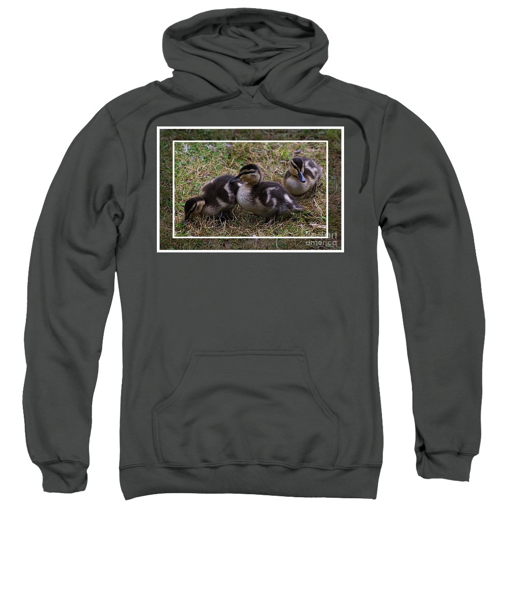 Ducks Sweatshirt featuring the photograph Triplets by Joseph Marquis