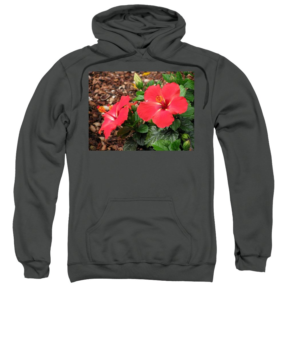 Hibiscus Sweatshirt featuring the photograph Tropical Hibiscus - Starry Wind 01 by Pamela Critchlow