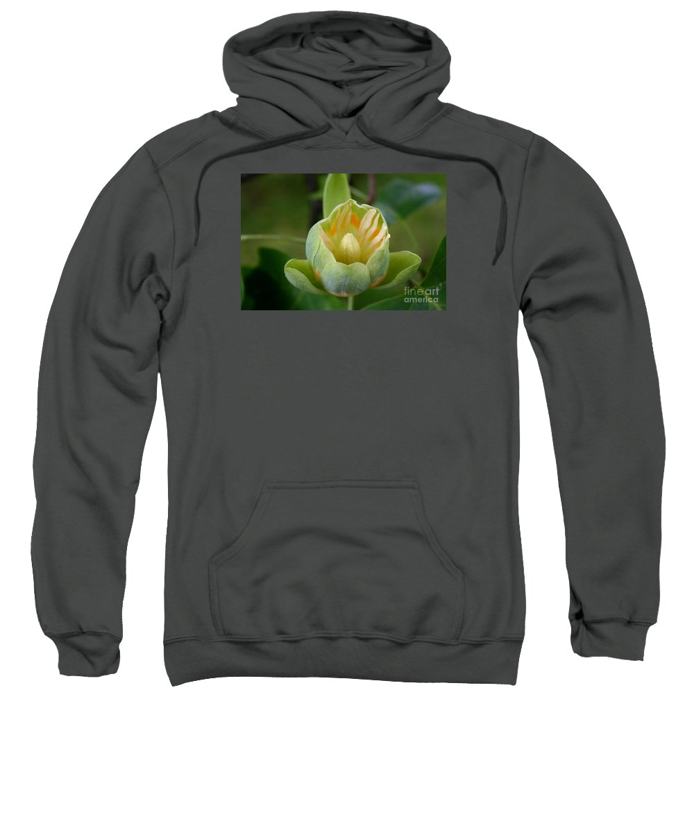 Tulip Tree Sweatshirt featuring the photograph Tulip Tree Bloom by Christiane Schulze Art And Photography