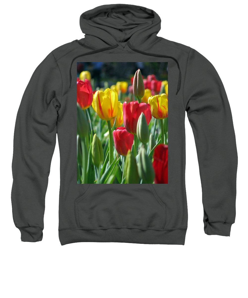 Tulip Sweatshirt featuring the photograph Tulips - Field With Love 22 by Pamela Critchlow