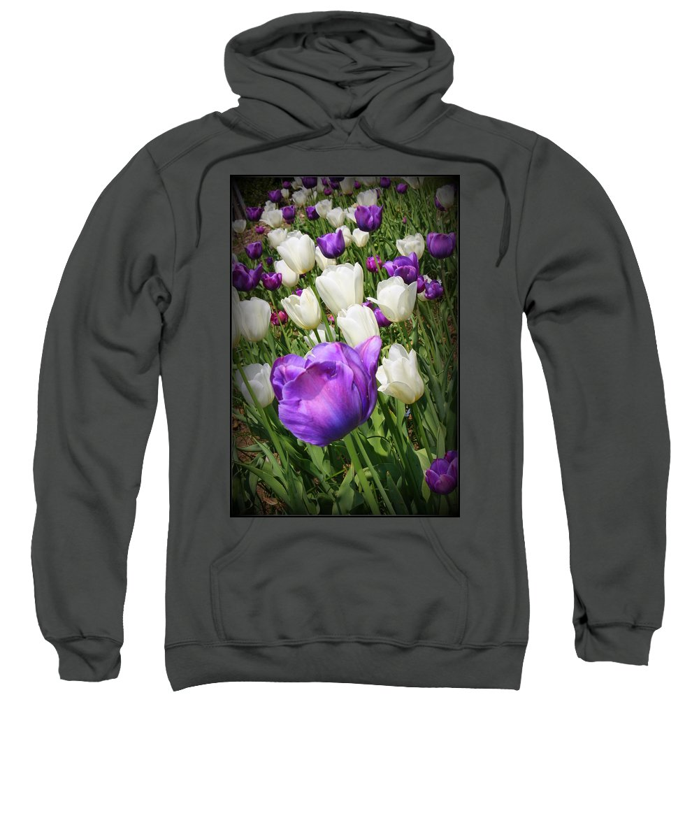 Tulips Sweatshirt featuring the photograph Tulips In Purple And White by Dora Sofia Caputo Photographic Design and Fine Art
