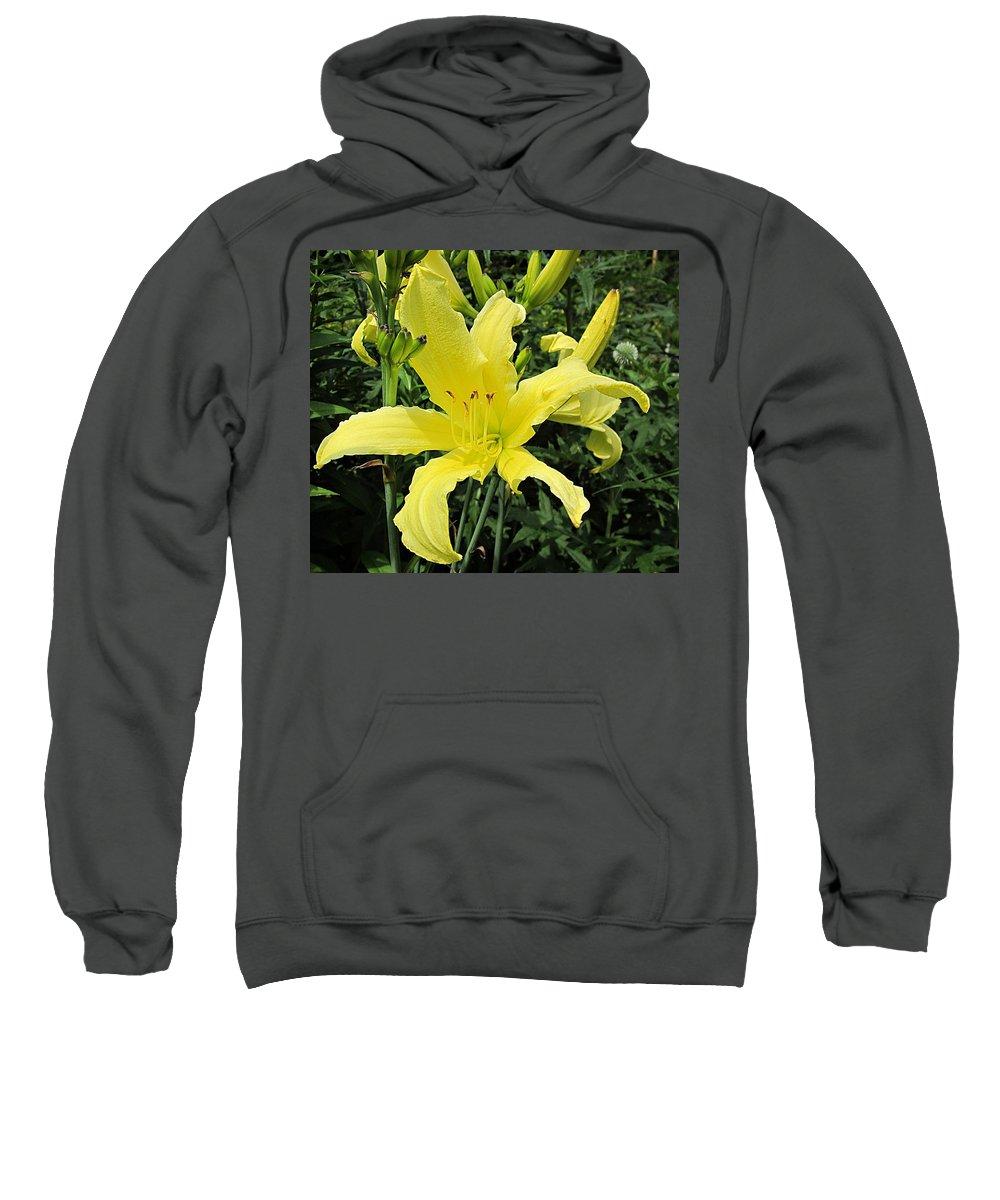 Twist Of Lemon Daylily Sweatshirt featuring the photograph Twist Of Lemon Daylily by MTBobbins Photography
