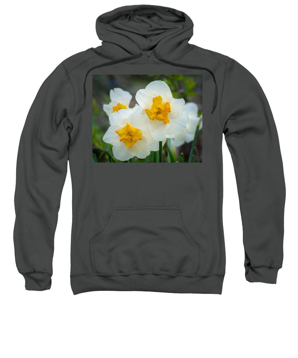 White Sweatshirt featuring the photograph Two-toned Daffodils by Bill Pevlor