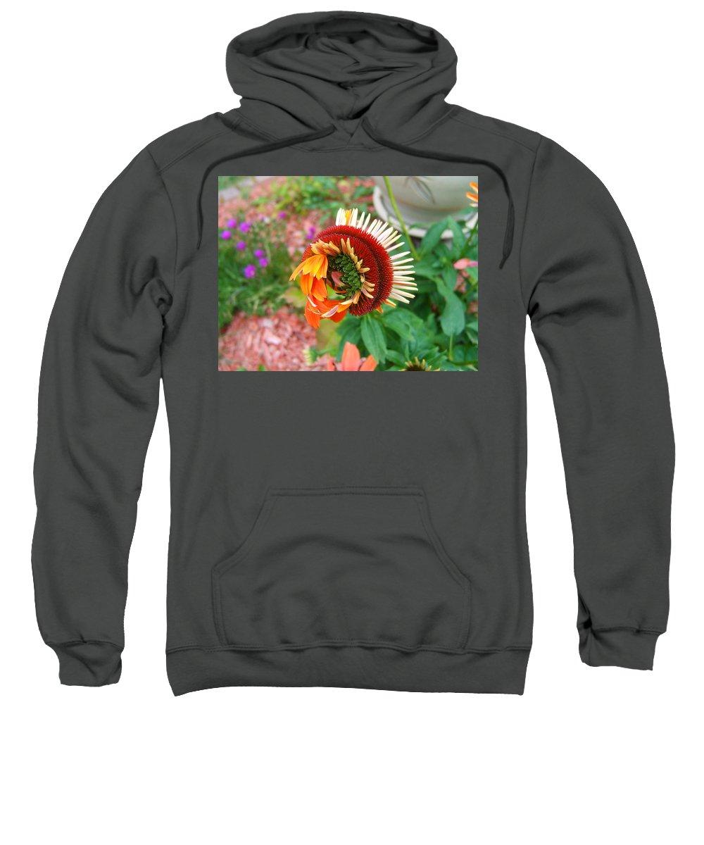 Flower Sweatshirt featuring the photograph Unfolding Coneflower by Elaine Duras