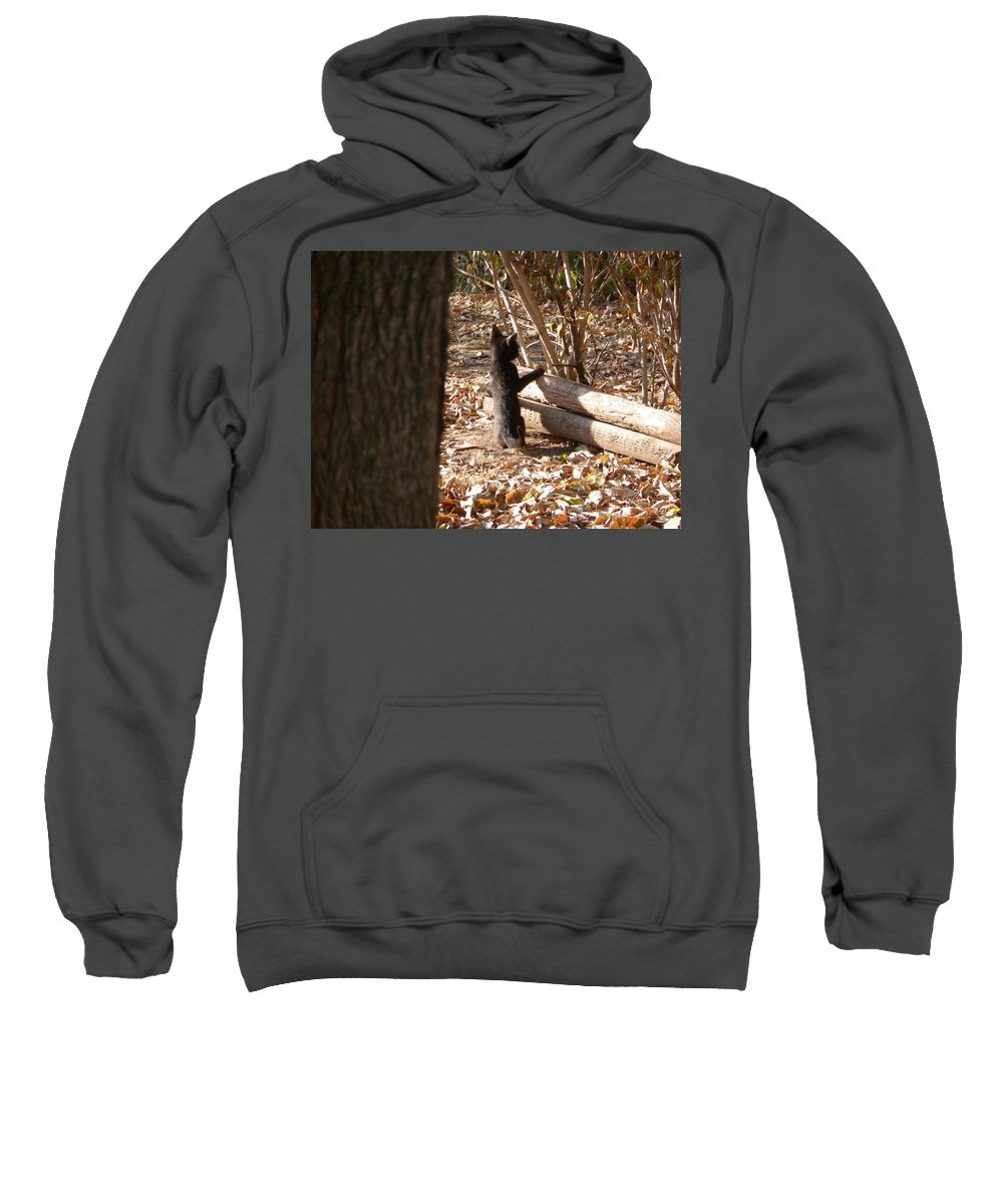 Black Cat Sweatshirt featuring the photograph I See You by Karen Capehart