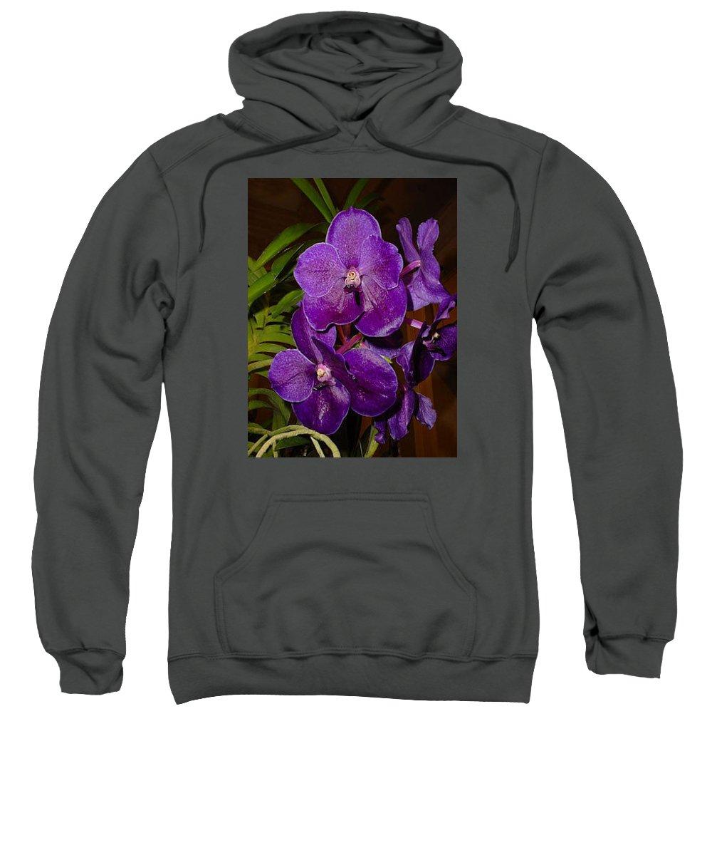 Vanda Flowers Sweatshirt featuring the photograph Vanda Dark Purple by Nancy Chenet