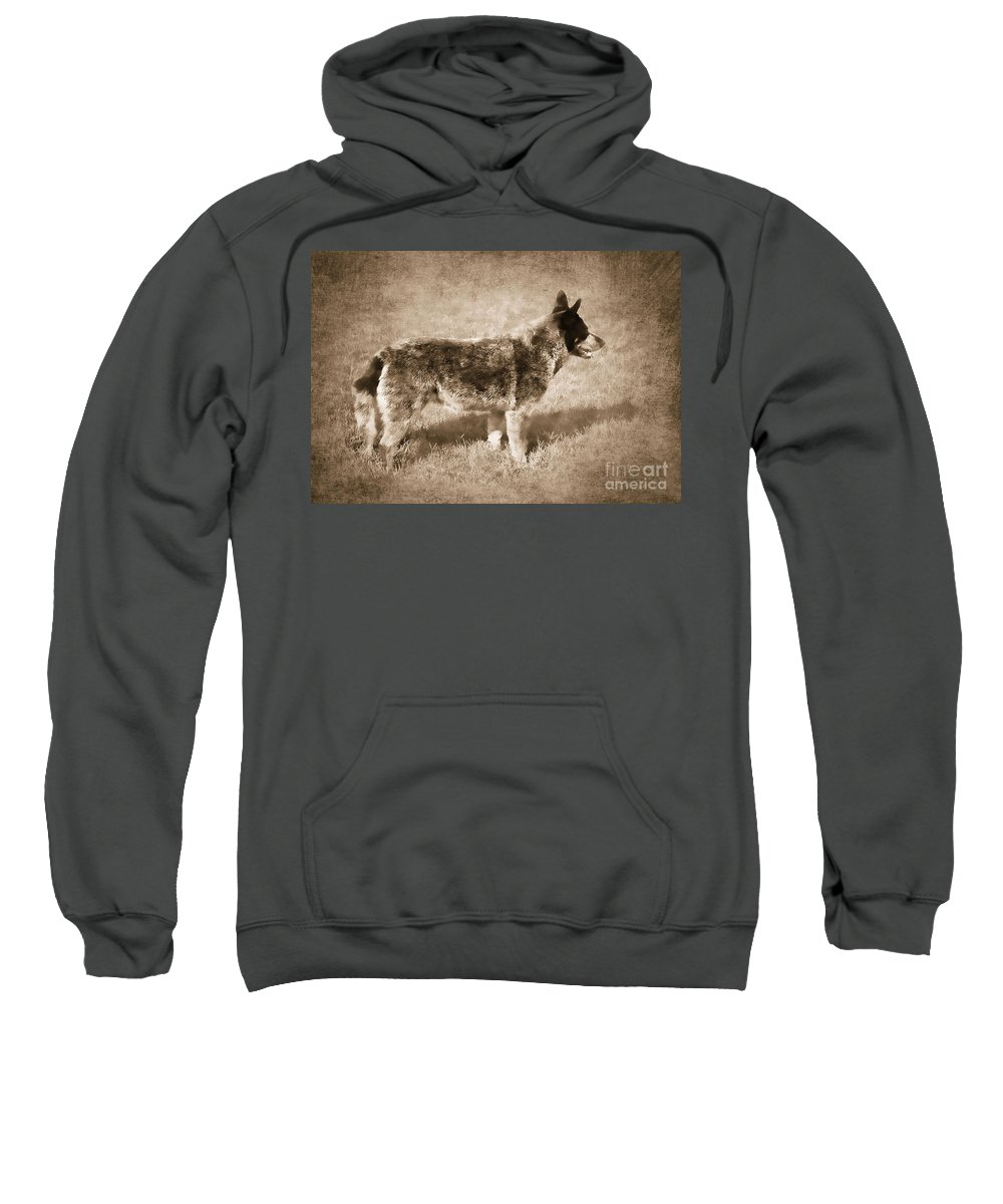 Dog Sweatshirt featuring the photograph Waiting For My Master by Betty LaRue