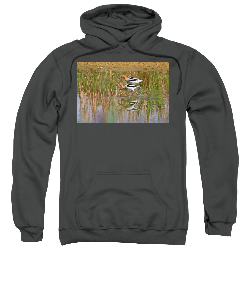 Avocet Photograph Sweatshirt featuring the photograph Walking My Baby Back Home by Jim Garrison