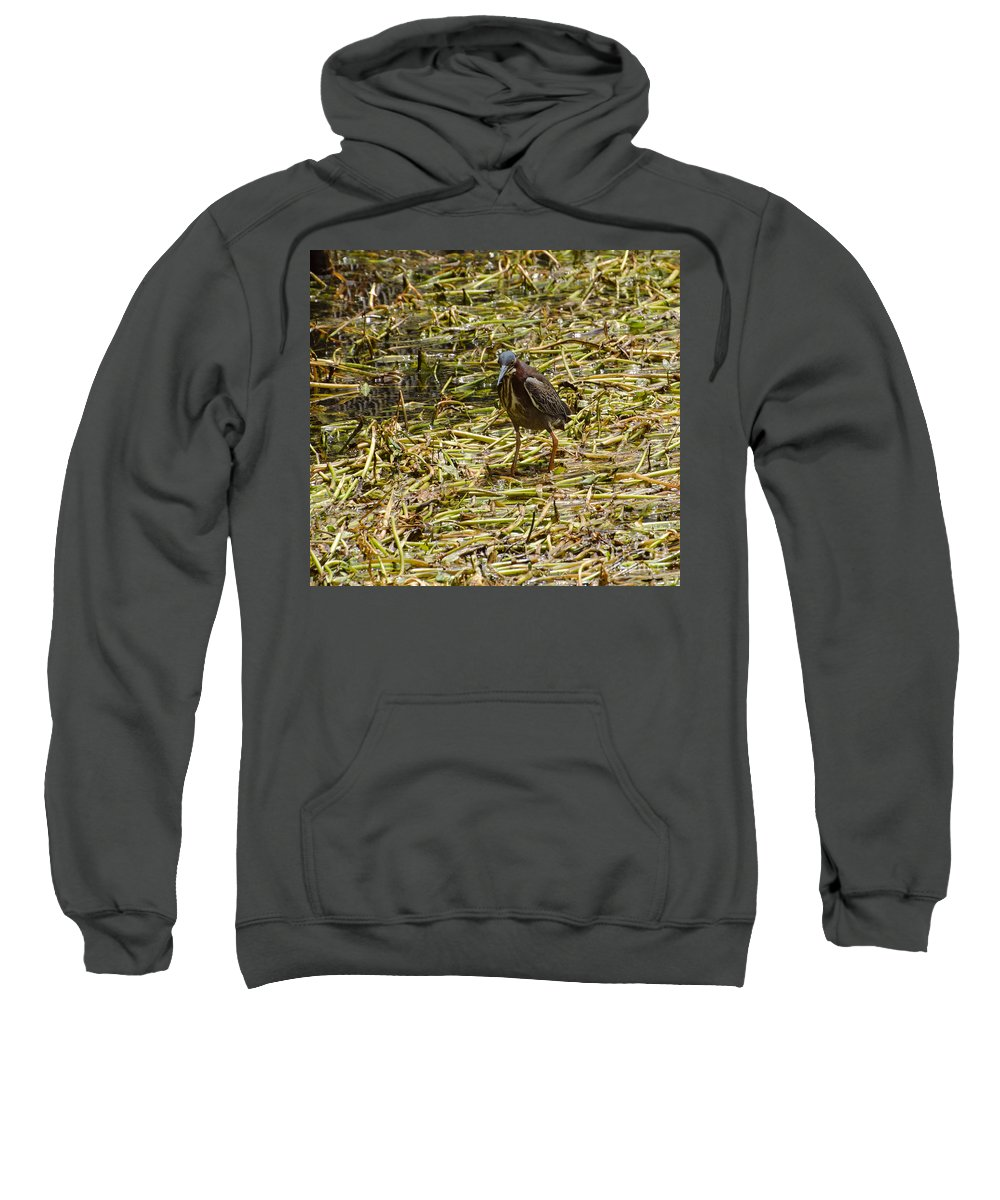 Bird Sweatshirt featuring the photograph Walking On The Reeds by Donna Brown