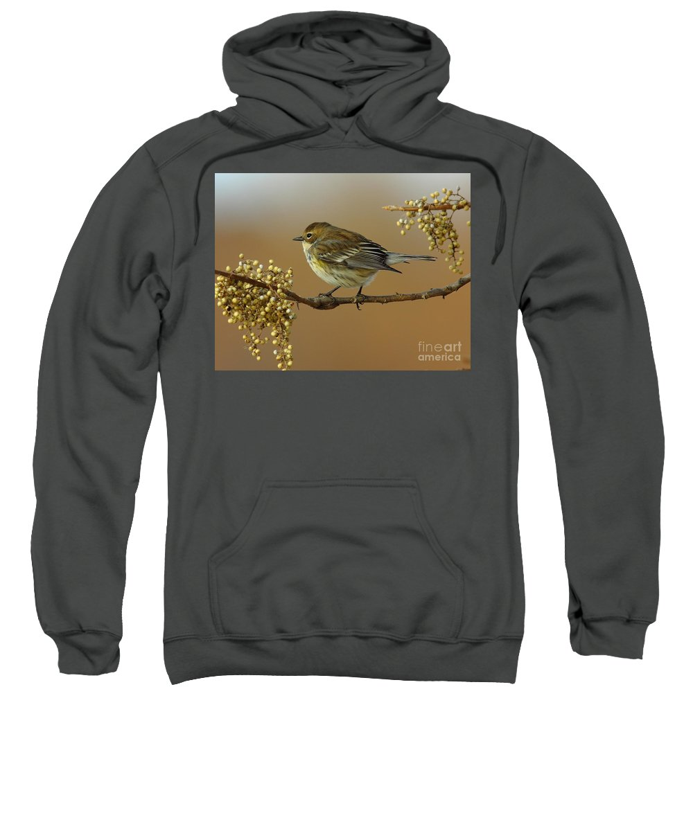 Animal Sweatshirt featuring the photograph Yellow Rumped Warbler by Robert Frederick